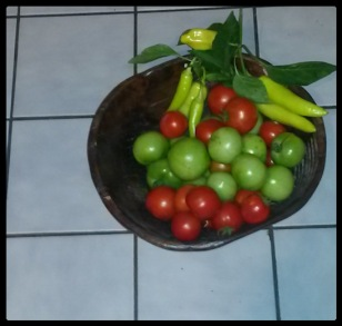 Ripe red tomatoes and green tomatoes