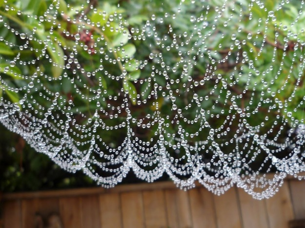Spider Web pearls by Lisa